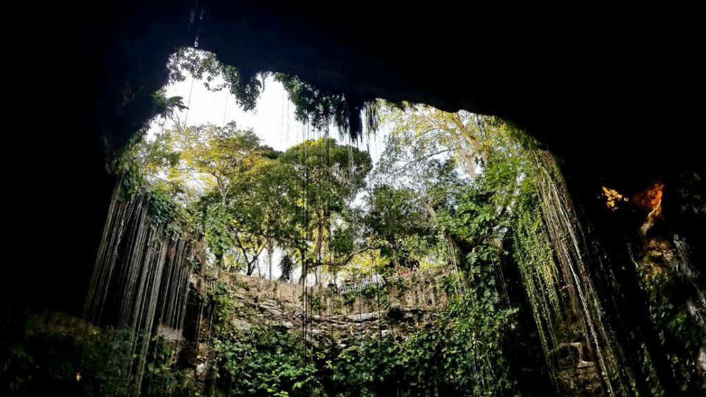 Vines growing down into caves at Ik Kil Cenote