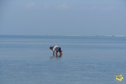 Looking for shellfish in the seas of Bohol