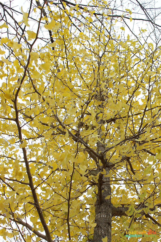 SGMT Japan Fall Foliage 02