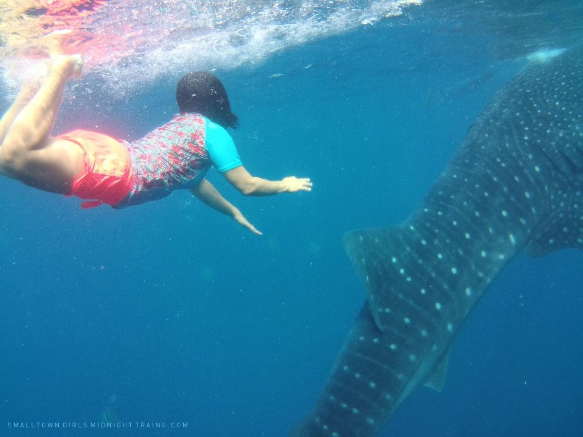 SGMT Philippines Cebu Oslob Whale Shark 05