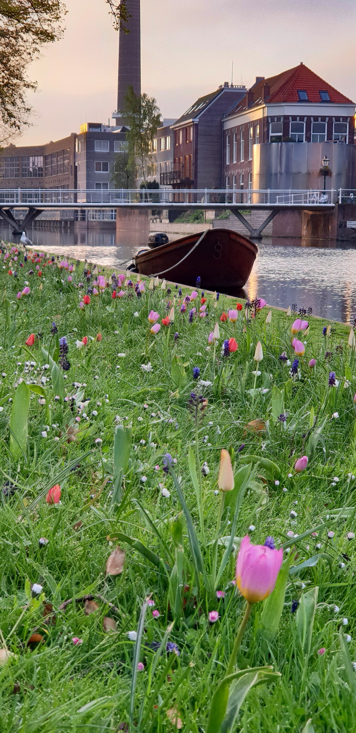SGMT | Leiden | Tulips by the river