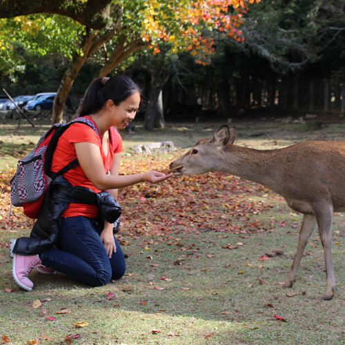 SGMT   Book My Instagram   Nara