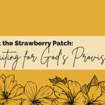 The Lesson at the Strawberry Patch: Waiting for God's Provision