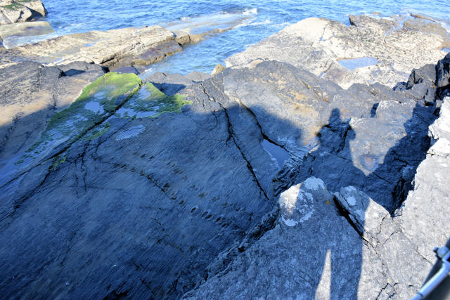 Tetrapod footprints on Valencia Island in Ireland.