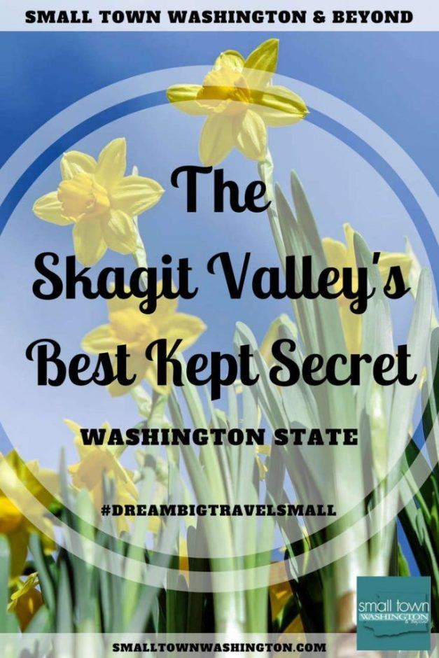 The daffodil fields in the Skagit Valley.