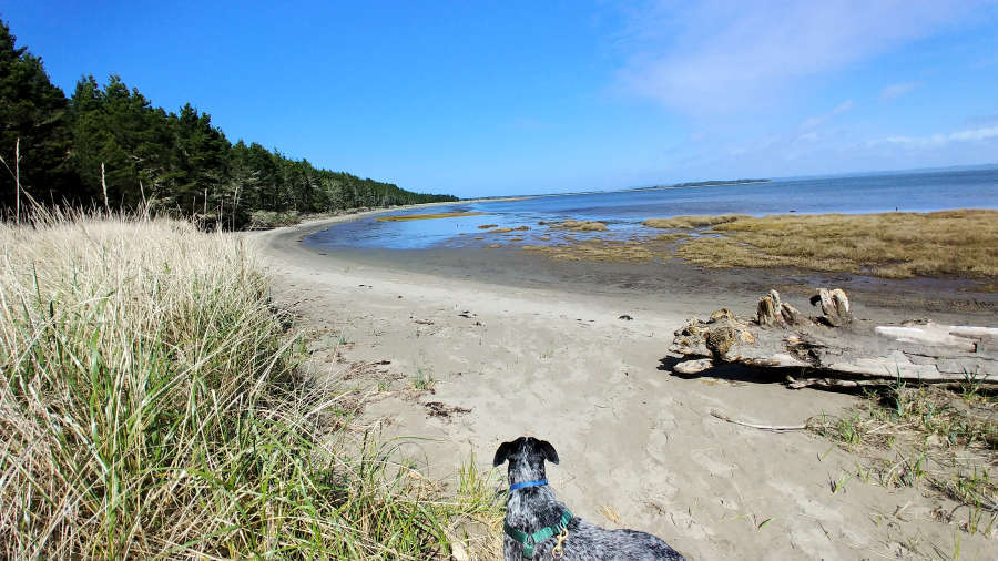 Leadbedder State Park on the Long Beach Peninsula.