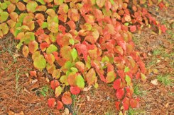 nature-center-red-leaves
