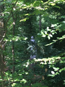 statue hidden between trees