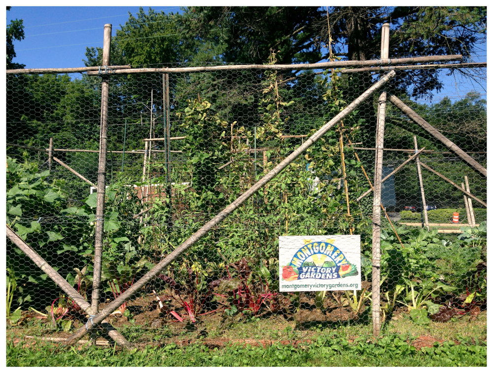 Montgomery Victory Garden in Kensington, Maryland