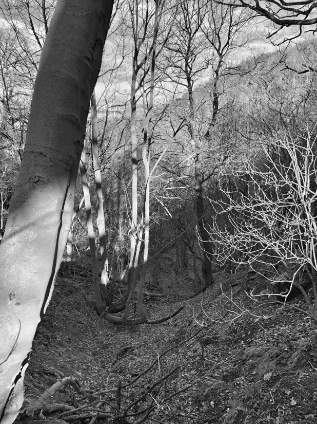 Walking in the woods on helsby hill in Cheshire