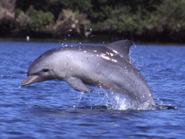Small-World-Tv-Dolphin