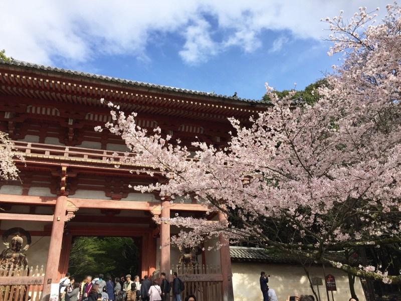 醍醐寺桜2016 1
