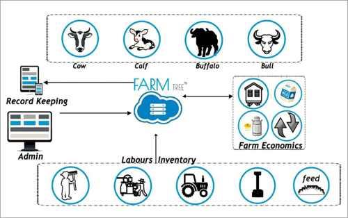 Digital dairy farming setup