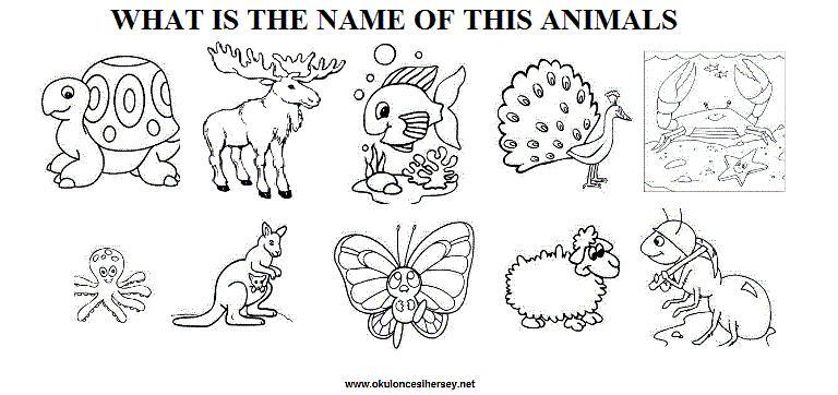 English Worksheets Zoo Animals 2
