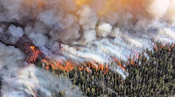 How Wildfires Affect Air Quality in Devastating Ways – Smart Air