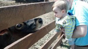 At the petting zoo in Burr Ridge.