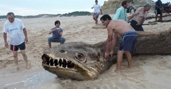 Strana creatura trovata sul lago Memphremagog