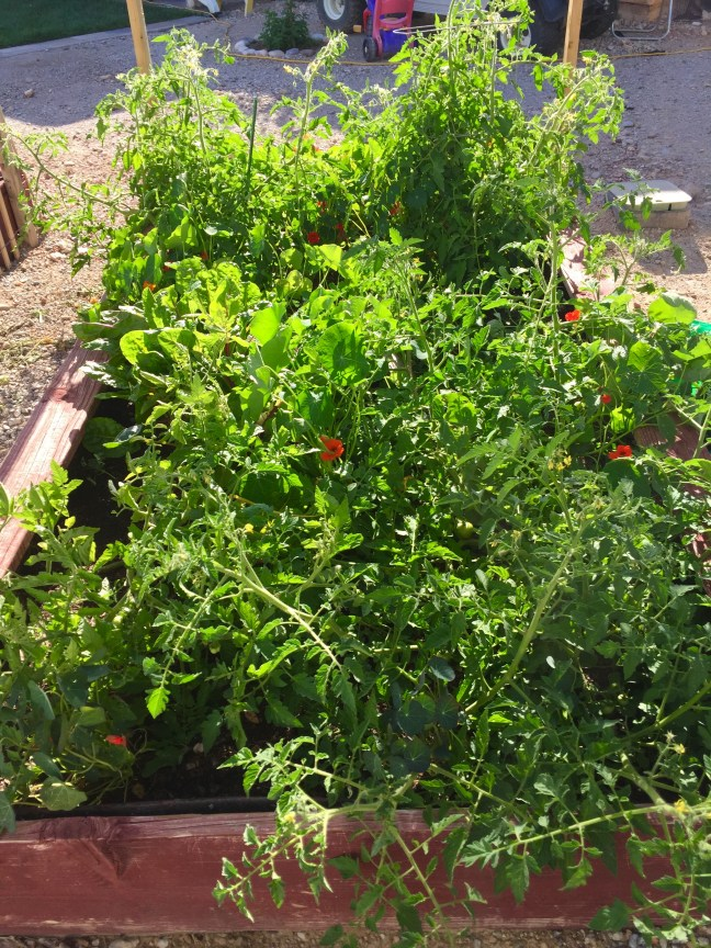 7 Secrets to a More Productive Garden
