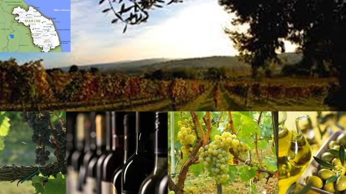 Presentazione vini olio