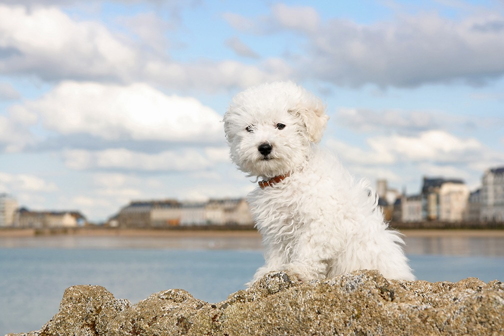3 Dog Breeds That Are Perfect for the Allergy-Prone Pet Lover