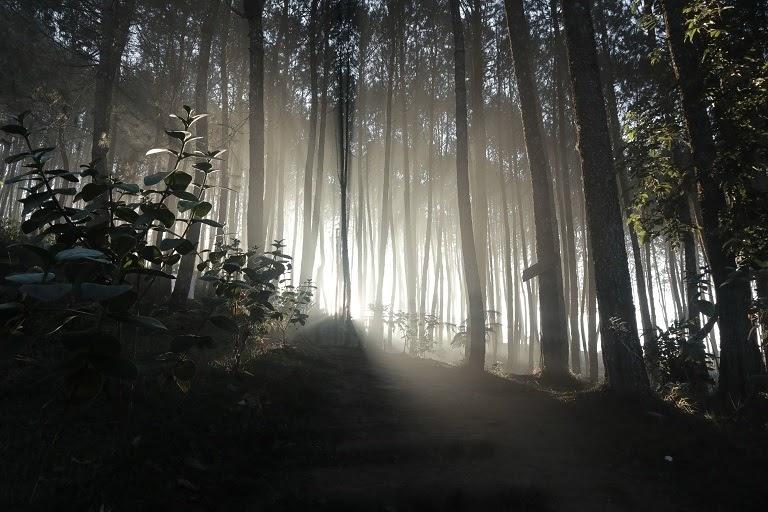 free stock photo sunrise in woods