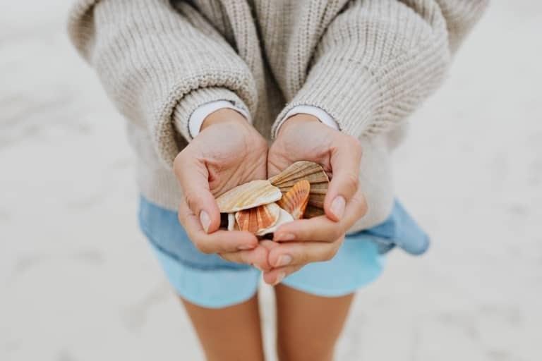 free stock photos holding seashells