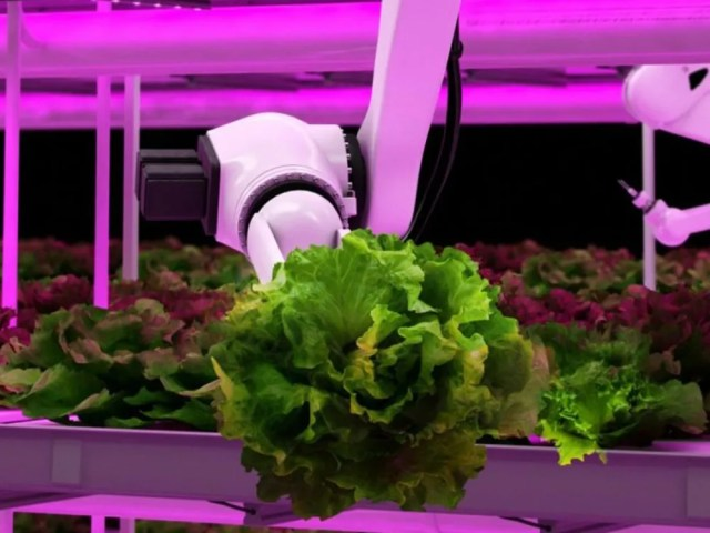 Semiconductors power robotics and other functions at Urban Stalk, a Hamilton, Ont.-based start-up moving agriculture from fields to city centres.