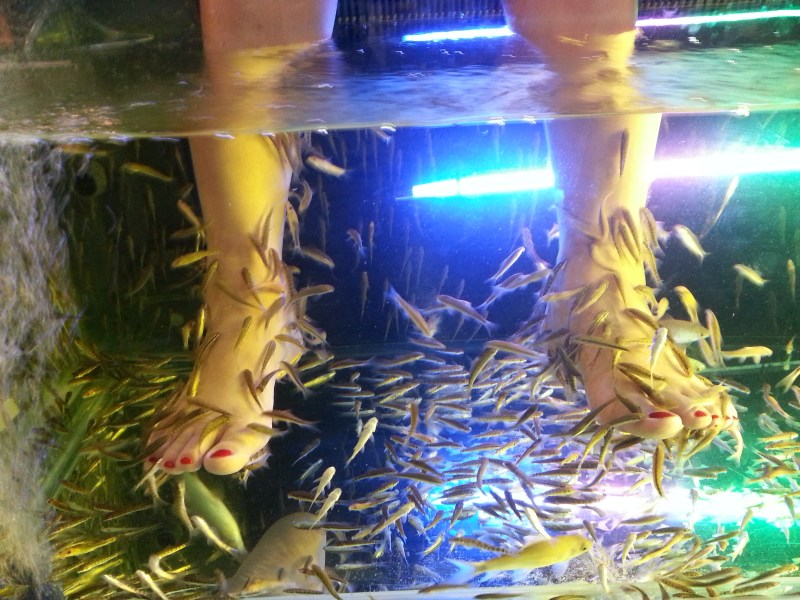 SEE A DOCTOR FISH | THAILAND