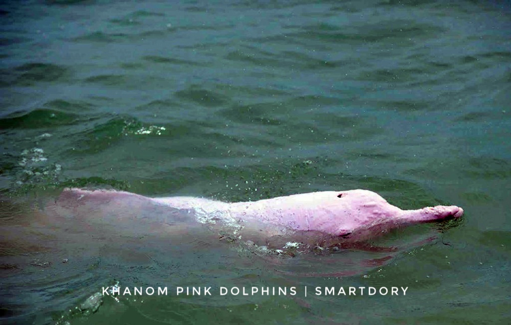 A pink dolphin.