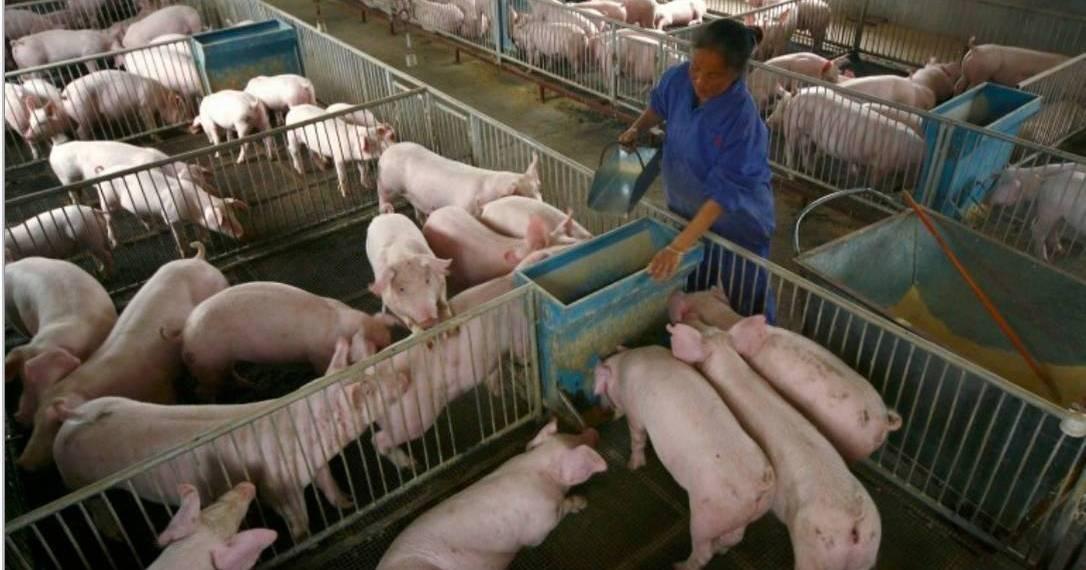 """G4 EA H1N1: Novo vírus com """"potencial pandémico"""" detetado na China…"""