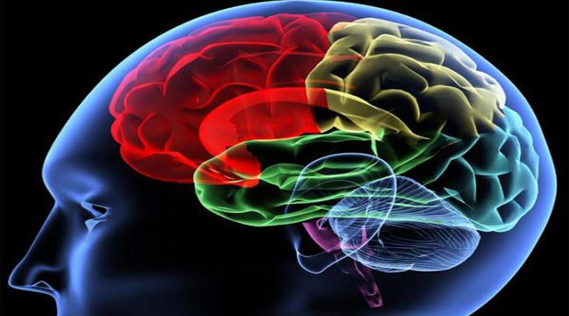 INGLÉS 1 Cerebro