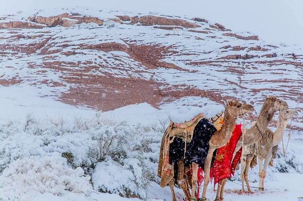 Imagens incríveis do deserto do Saara coberto de gelo enquanto as temperaturas descem para -3 ° C