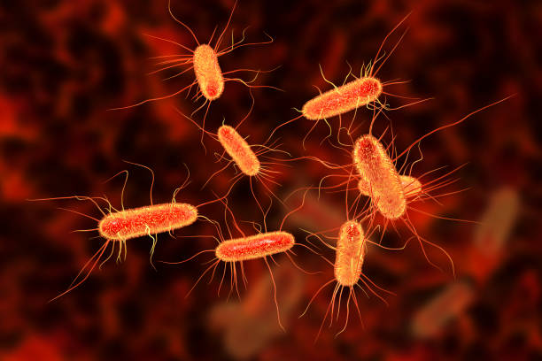 Centenas de genes resistentes a antibióticos encontrados no trato gastrointestinal de bebés dinamarqueses