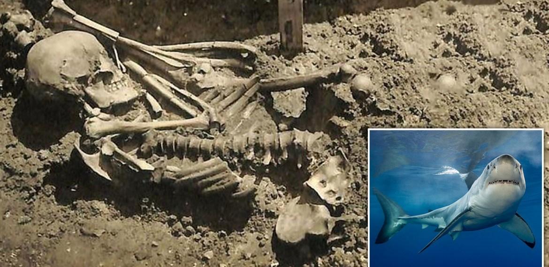 Encontrada Vítima de ataque de Tubarão com 3.000 anos