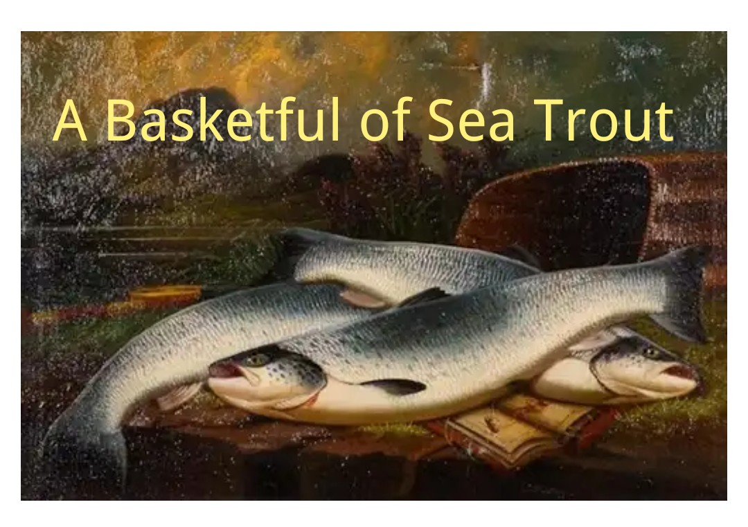 A Basketful of Sea Trout Summary And Questions 2