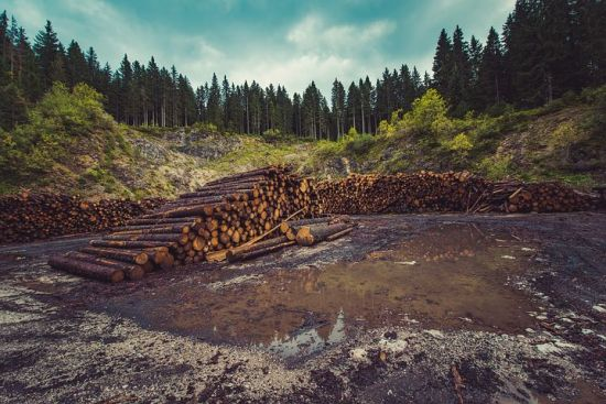 Deforestation causes and impacts,