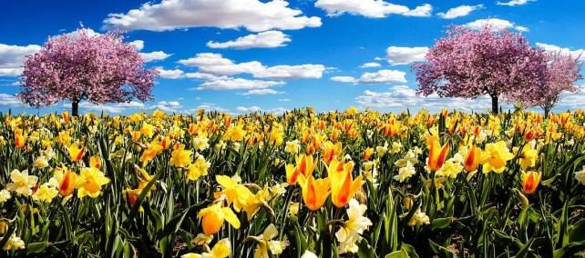 The Daffodils Summary