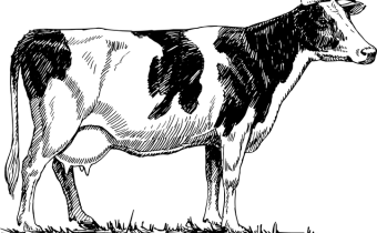 Model Essay On Cow For Students 11