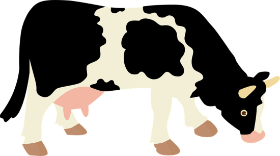 Essay on cow