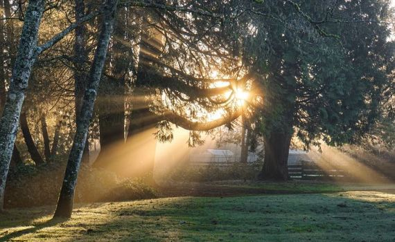 There's A Certain Slant of Light |Summary, Questions and Theme 7