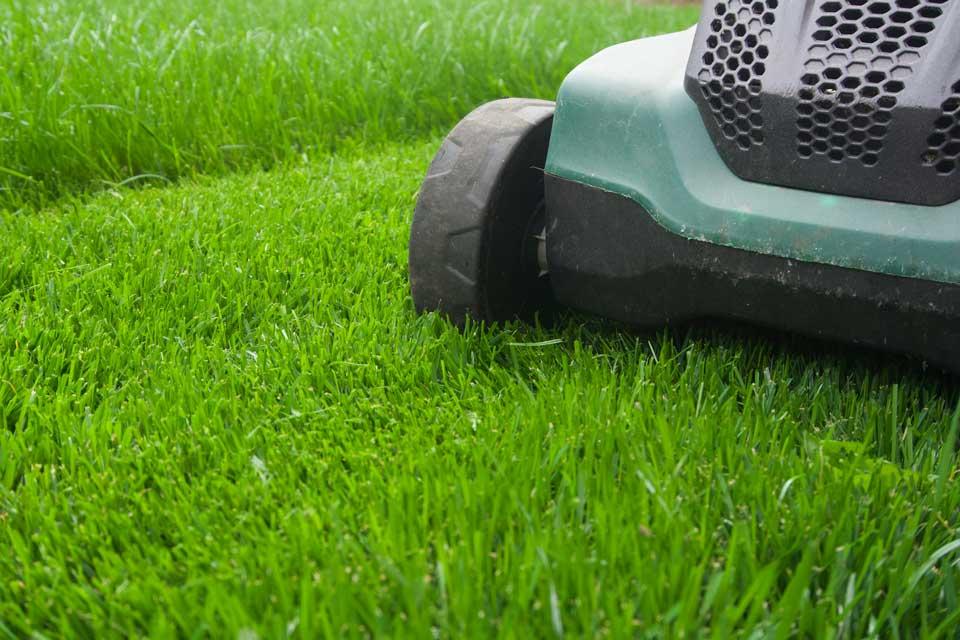 Rasen pflegen – So gelingt dir der perfekte grüne Teppich vor dem Haus