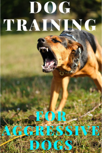 best dog training for aggressive dogs