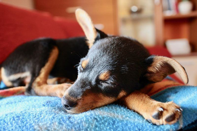 how can i help my puppy with stress