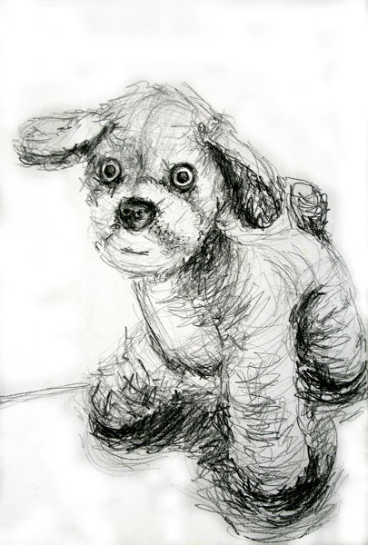 Drawing Of A Toy Doggy
