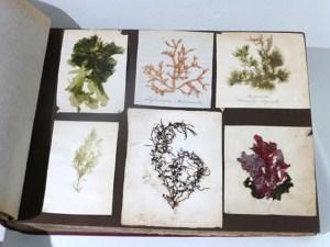 Seaweed album3