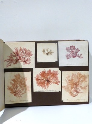 The Seaweed Album