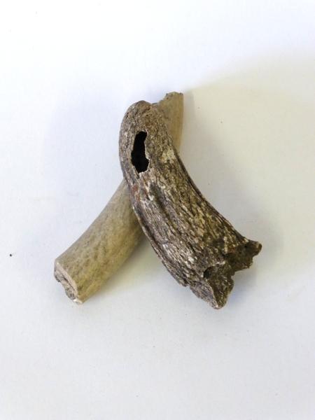 Tusks Of Grassington Beasts