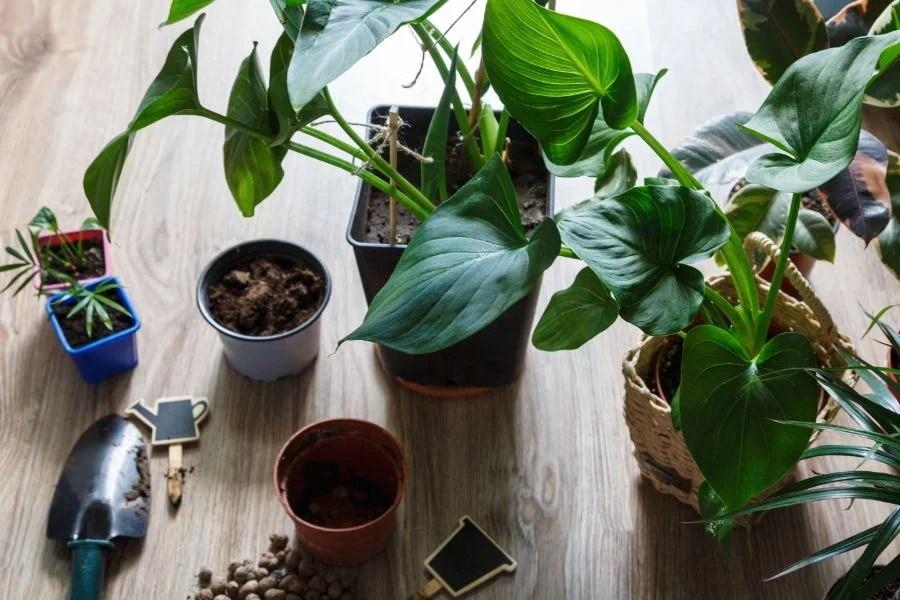 potting soil for indoor plants 5