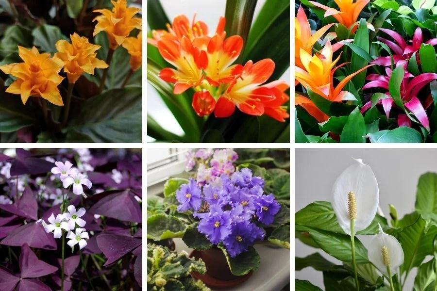 15 Stunning Low Light Flowering Indoor Plants Smart Garden Guide