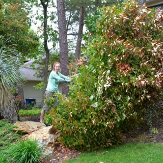 That's Photinia Freakin Awesome!